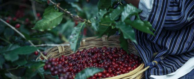 Características café según origen