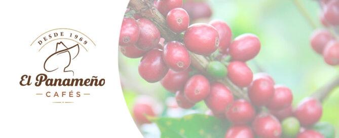 Cultivo y beneficiado café arábica